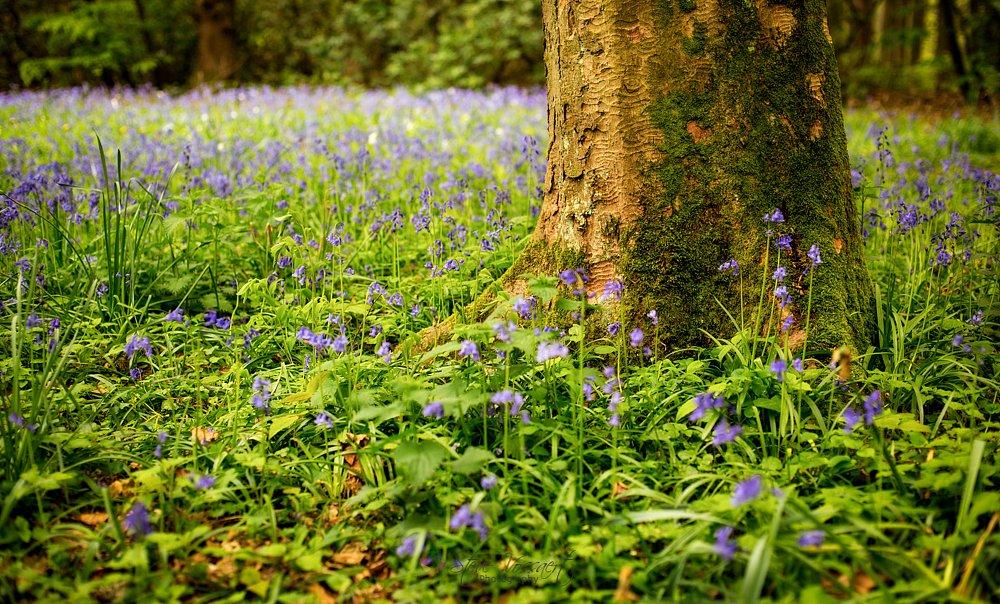 Spring-Awakening-1.jpg