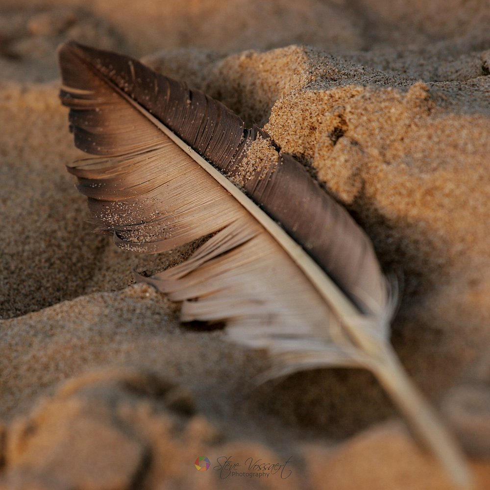 Feather-in-Sand.jpg